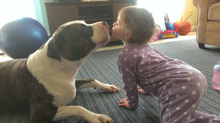 Visit us at www.pitfriendzy.com to post your #pitbull pics!