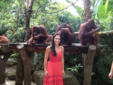 *Singapore Zoo Breakfast with Orangutans - Singapore   Viator