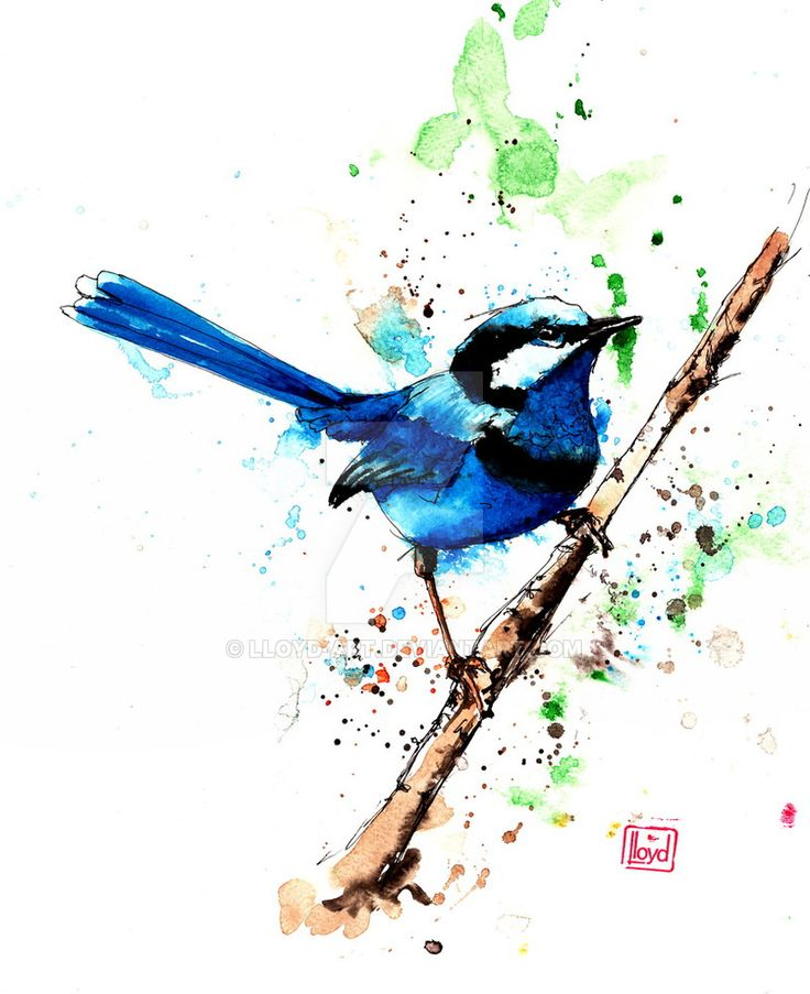 Fairy Wren by lloyd-art
