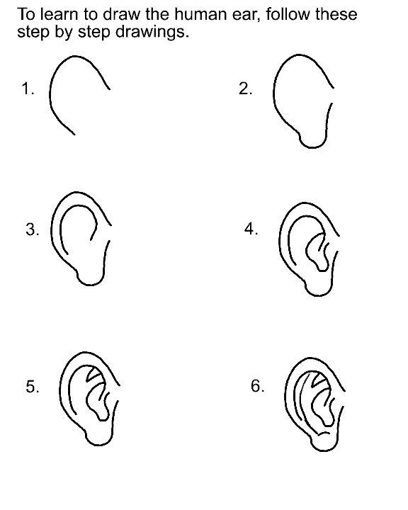 drawing the ear