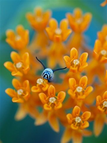 flowers and bees are a natural fit!