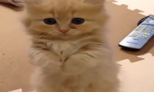 A cat so sweet.