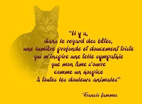 """Francis Jammes - """"Il y a dans le regard des betes, une lumière...."""""""