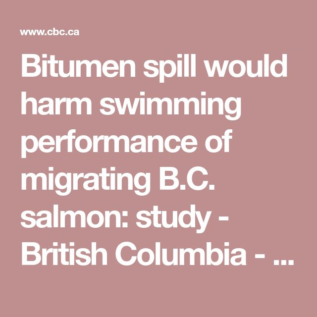 Bitumen spill would harm swimming performance of migrating B.C. salmon: study - British Columbia - CBC News