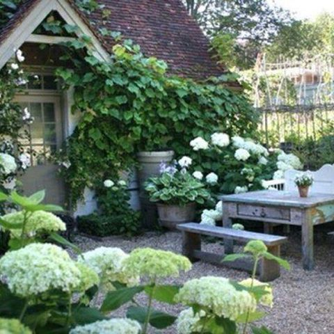 elements of a stylish small yard: hydrangea + pebbles + rustic seating + viney wall stuff (what is that, anyway? So lush and lovely!)