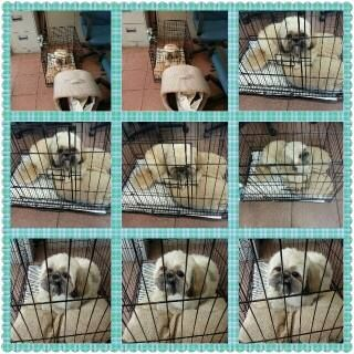 jason's pet relocation a singapore based company specialized in pet import ,export, pet relocation etc