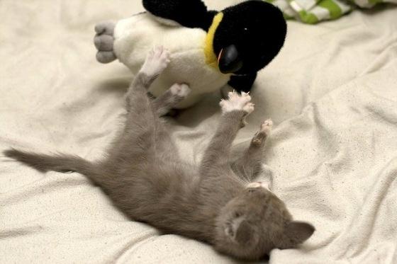 Penguin Attack!