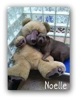 Please help Noelle! ***click her pic for info!!*** Cuddly, forgotten dog waits in animal shelter for over two years!!