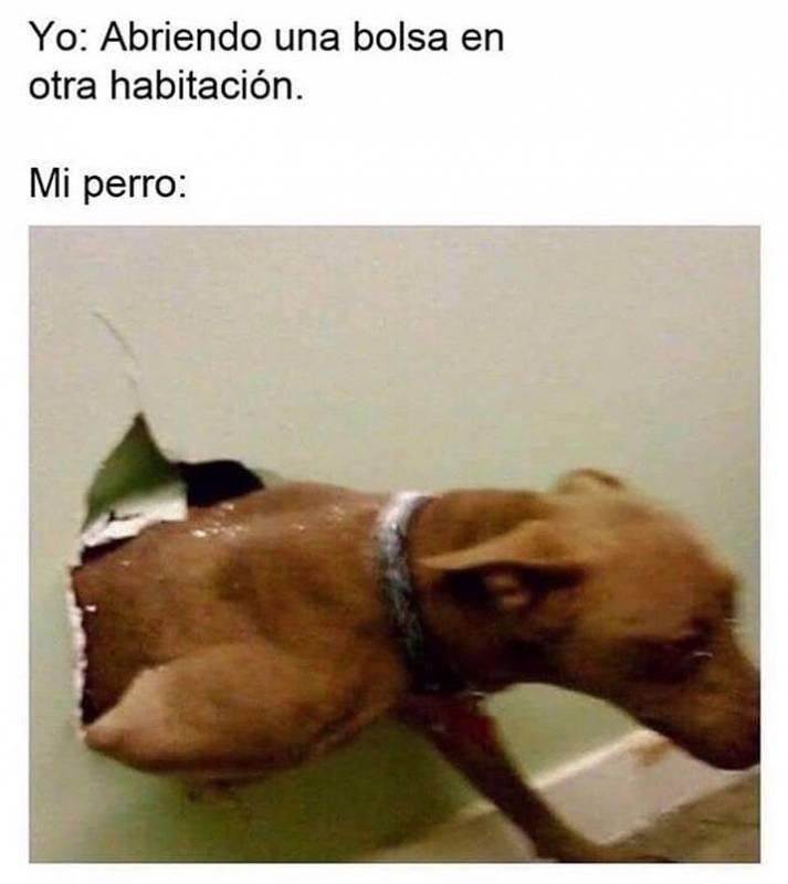 Memesespanol Chistes Humor Memes Risas Videos Argentina Memesespana Colombia Rock Meme Memes De Animales Divertidos Memes Divertidos Memes En Ingles