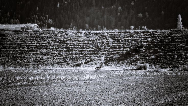 BWSTOCK.PHOTOGRAPHY  //  #sheep #hillside