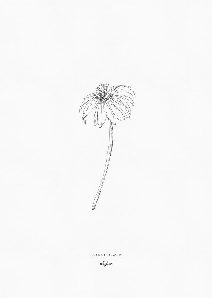 404 404 Flower Drawing Botanical Drawings Hand Drawn Flowers