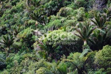 Native Nikau & Bush Background, NZ Royalty Free Stock Photo