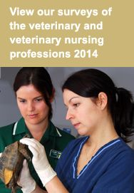 Information on how to become a veterinary surgeon