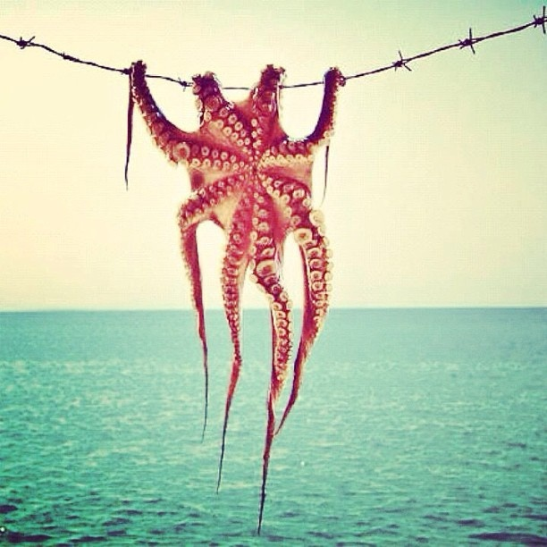 In #greece we hang our #octopus