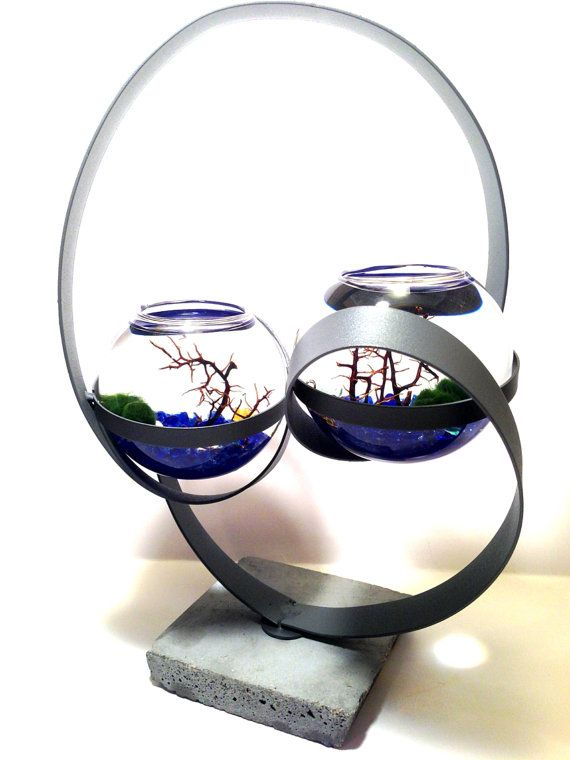 Marimo Moss Ball Terrarium Aquarium Centerpiece LIMITED EDITION on Etsy, $50.00