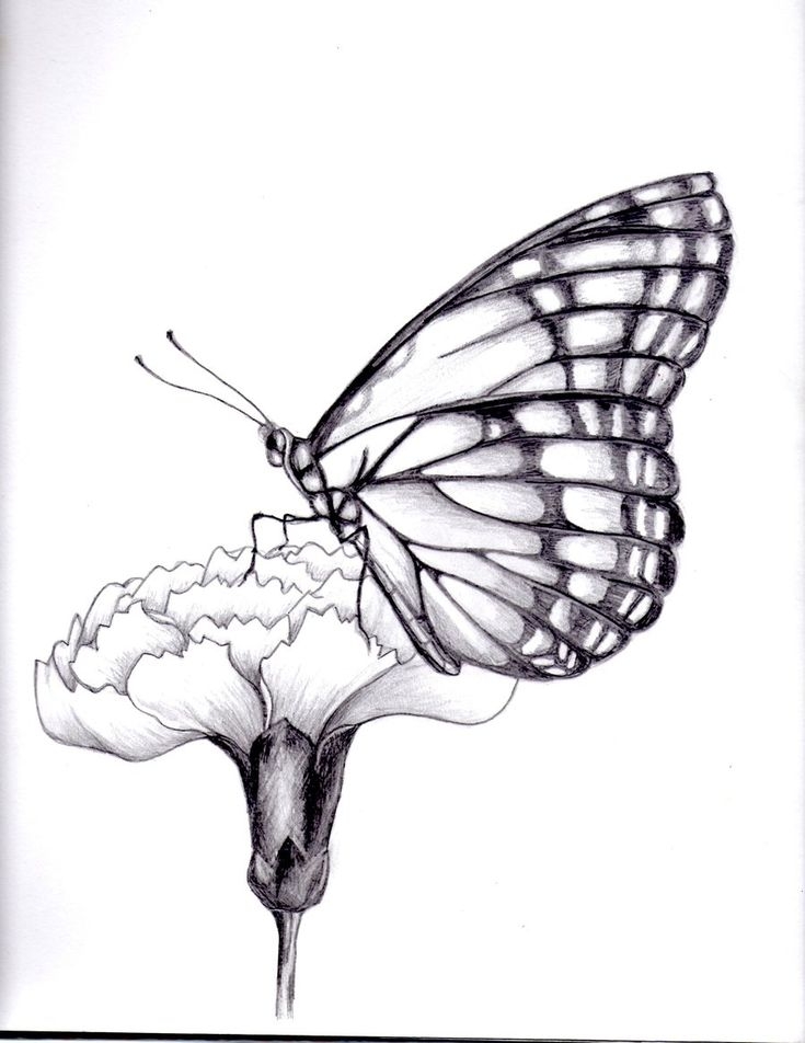 my drawing of a butterfly. by kittycat727.deviantart.com on @deviantART