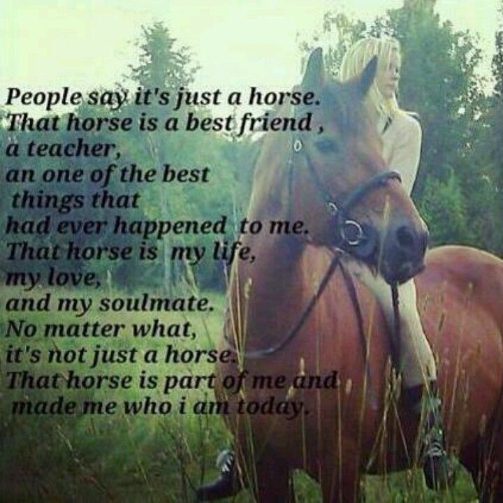 Not just a horse..