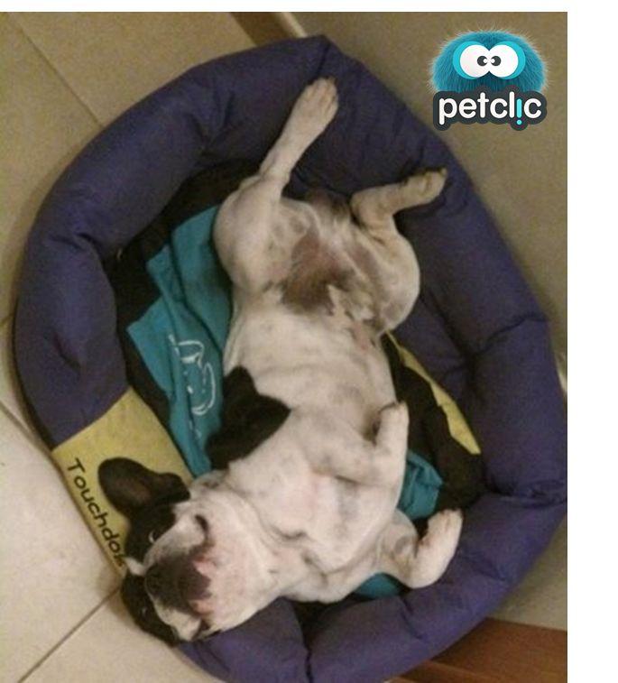 ¡El bebé de la casa! www.petclic.es