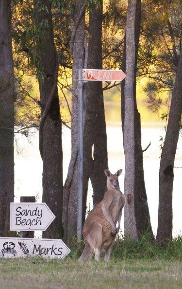 The River Shack - Yamba accommodation - Byron Bay - waterfront property - wildlife