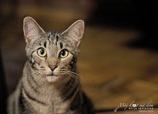 Mój kot ma dom - Akcja społeczna: V.043