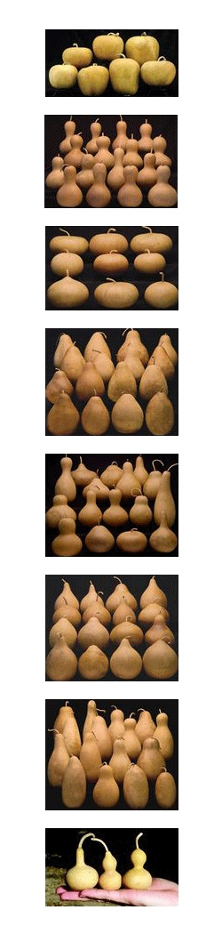 FREE SHIPPING!!!* on All orders that include $150 or more of Pre-Boxed Gourds! *Free shipping offer valid for lower 48 states. Alaska, Hawaii and International orders call in your order for discounted shipping. Bargain Boxes not included. Order must include at least $150 in purchases of pre-boxed gourds in order to receive free shipping. Offer not valid with any other coupons or specials.