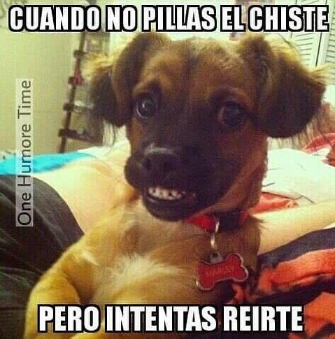 videos graciosos memes risas gifs graciosos chistes divertidas humor http://chistegraficos.tumblr.com/post/159372045409