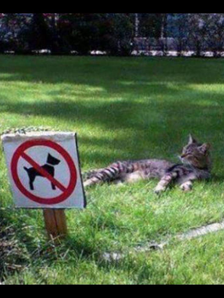 #CAT##ANIMALS##FUNNY# #CUT##AMAZING#