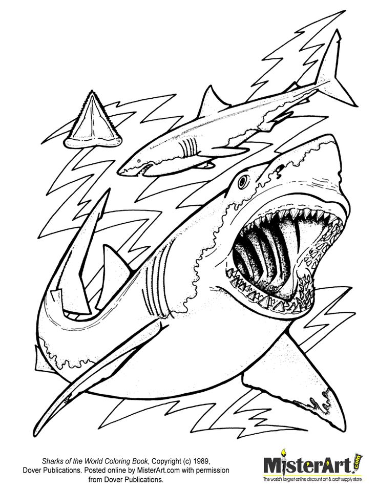 Free Coloring Page: Sharks of the World Coloring Book, Download Free Crafts for Kids, Dover Coloring Books | MisterArt.com