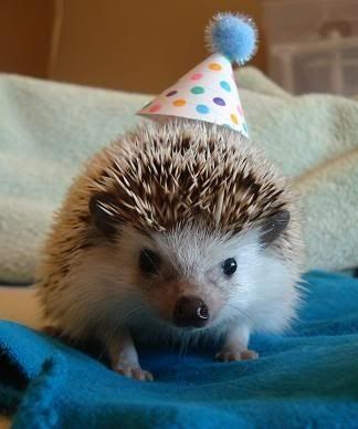 1000+ images about Super Cute Hedgehogs! on Pinterest