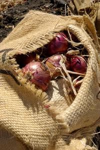 How to Grow Onions in Grow Bags: Ehow Uk, Burlap Sacks, Ehow Com, Growing Vegetables, Gardening Ii, Grow Bags, Grow Onions, Vegetable Gardening