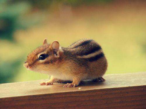 Cute Squirrels | Cute Squirrel | Cutest Paw