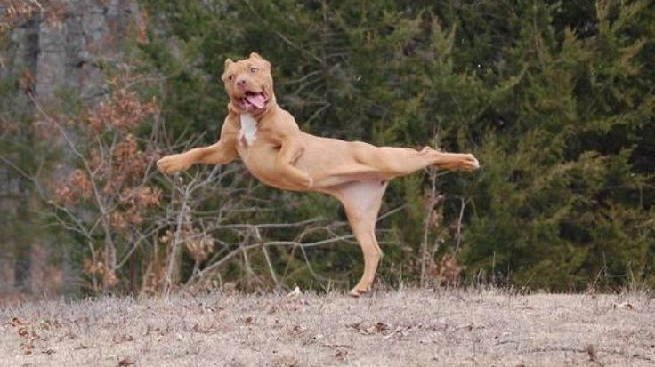 12 cães engraçados que foram fotografados em momentos constrangedores