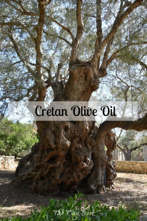 Cretan olive oil produced in Kolymbari by Biolea.