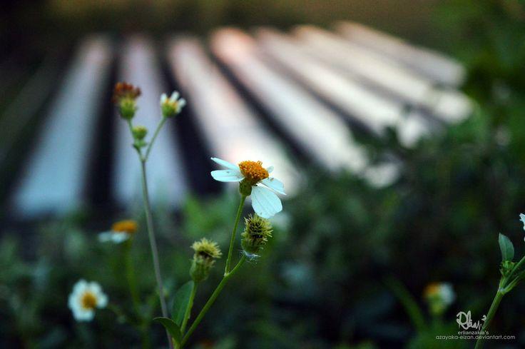 Wild Flowers by azayaka-eizan.deviantart.com on @DeviantArt