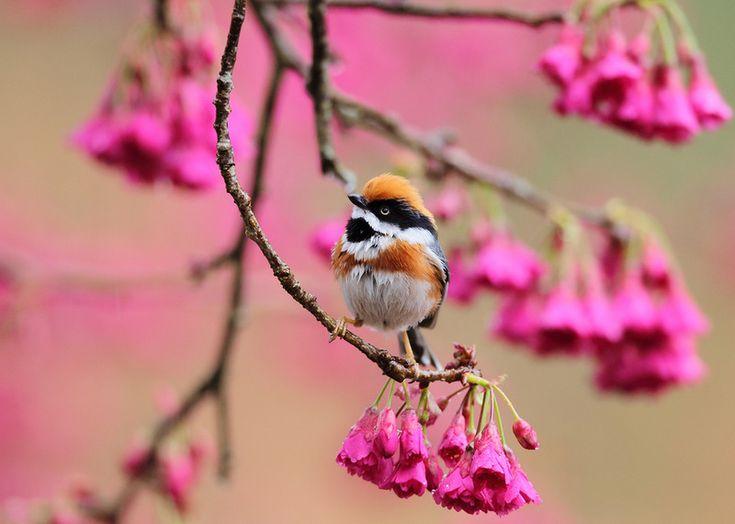 Картинки анимация весна красивые