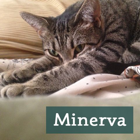 Minerva and her momma are big fans of our Natural Litter Box Cleaner & Deodorizer combo! Check them out here! http://etsy.me/1I2NXWh