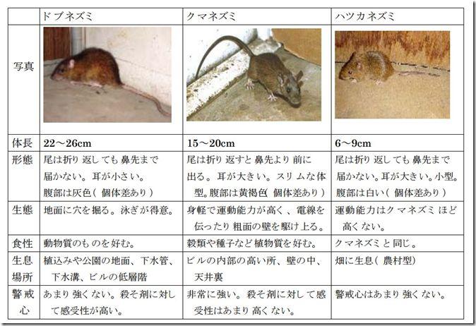 こんばんは。さすけです。 ネズミ・コウモリ問題に対してはかなり厳しいことも書いてきたこともあり、その後の状況に…