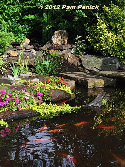 Digging asheville garden bloggers fling wamboldtopia for Digging a koi pond