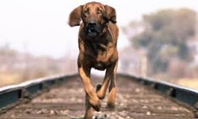 "There is a poem called ""The Hound of Heaven"" it is182-lines written by English poet Francis Thompson in 1893. The poem depicts a hound of heaven chasing us down never stopping to rest always search..."