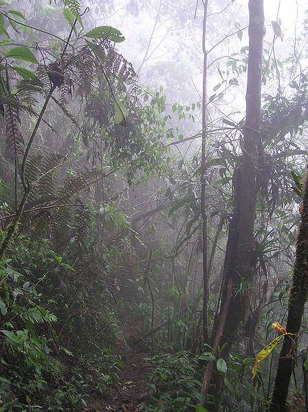 Farallones de Cali, Valle del Cauca, Colombia.