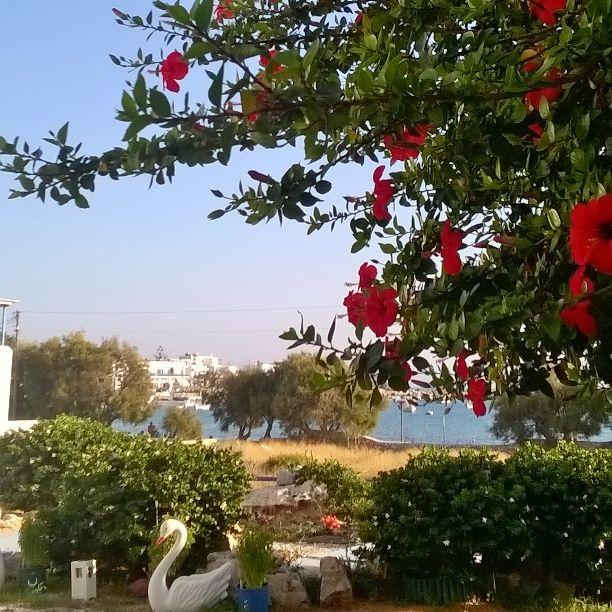 #seaview #paros #summervacation #greekisland #greece #sea