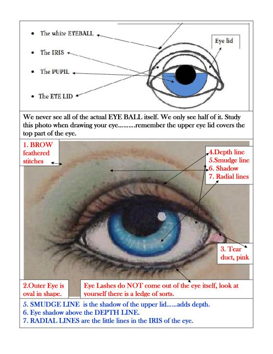 study your eyes