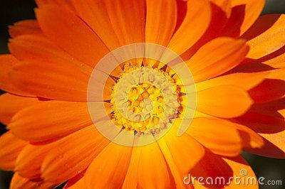 Marigolds flowers under sun rays