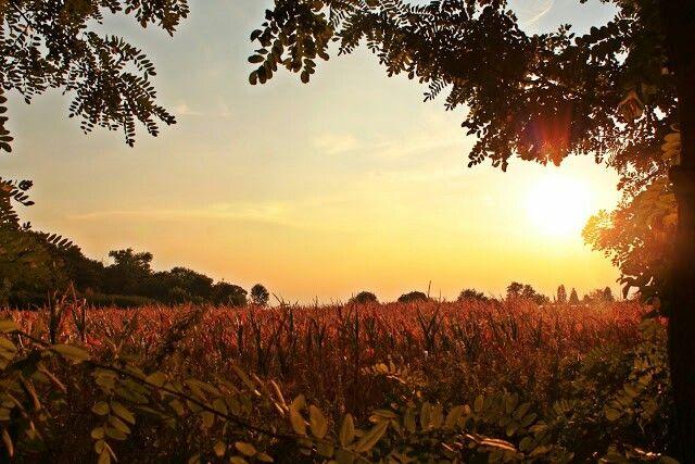 Sunset, sundown, province, Landscape - Hungary   - gyönyörű naplemente Pallagon