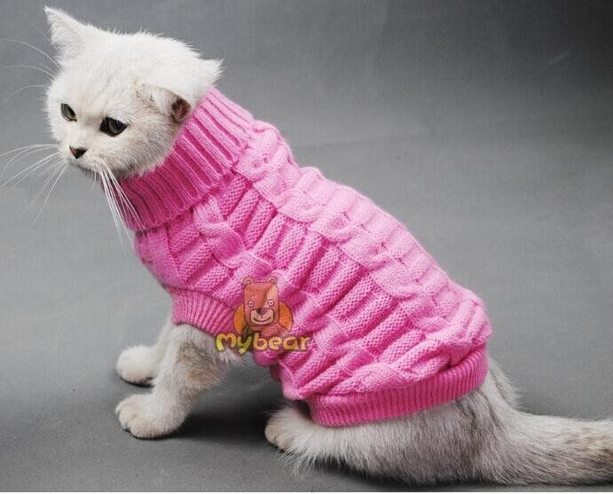15 besten Katze Bilder auf Pinterest | Hunde, Katzen kleidung und ...