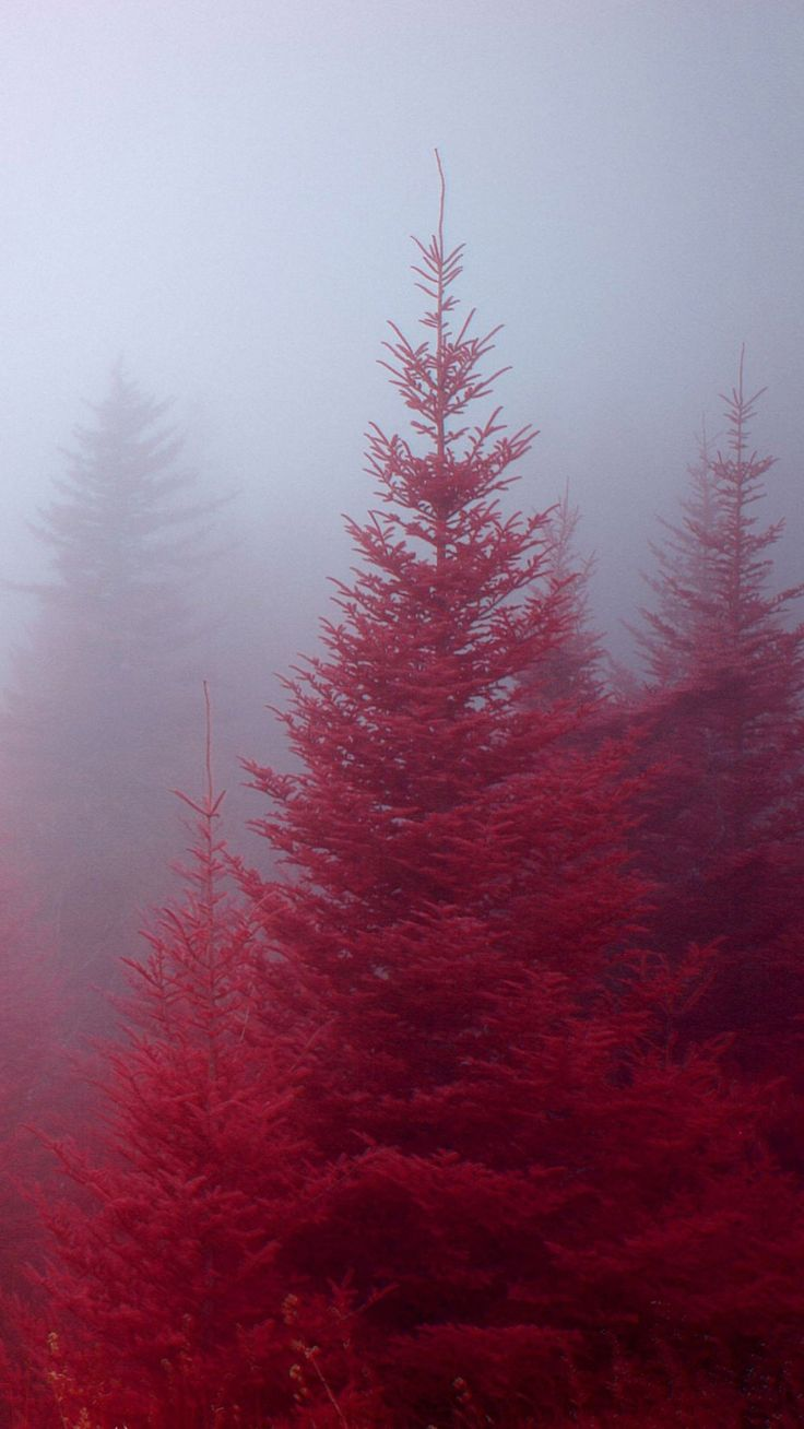 Red Nature iPhone6s wallpaper | iPhone7, スマホ壁紙/待受画像ギャラリー