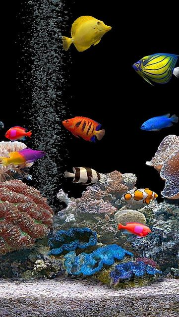 fish_underwater_colorful_coral