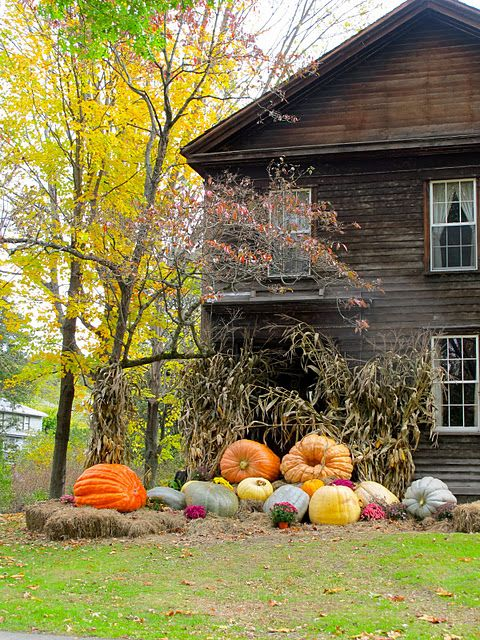 Love these pumpkins and colors!