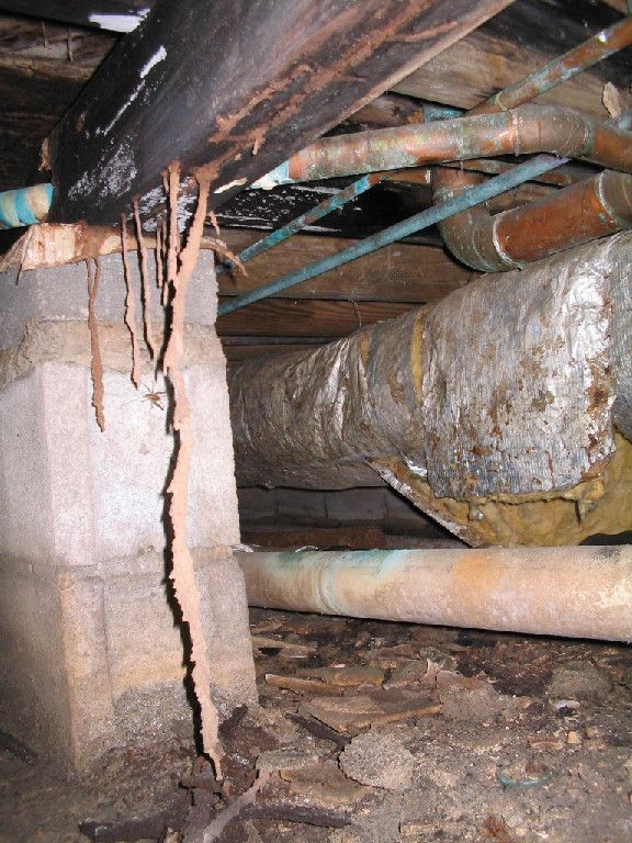 Termites build mud tubes anywhere they forage for food. This pic shows termite mud tubes hanging down from a bean under a home. Call Universal Pest & Termite today for a free inspection.  757-502-0200.  www.yourpestguy.com