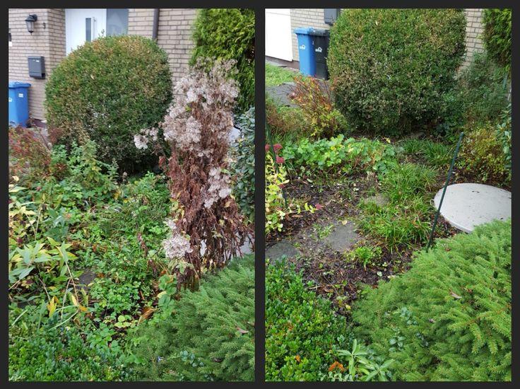 Great Unkraut erkennen und entfernen und Pflanzen bed rfnisgem pflegen pflanzen garten regelm ig pflege